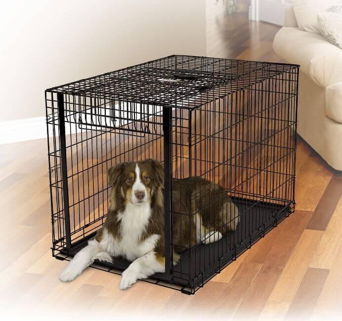 Посадить собаку в клетку