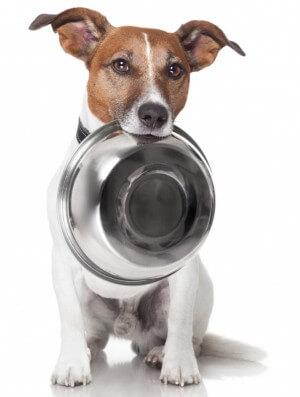 Миска для собаки