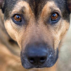 Отрава для собак