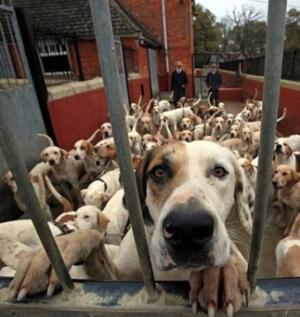 Вольеры для собак