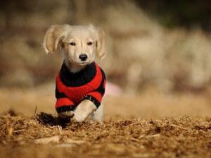 Чем вяжут одежду для собак