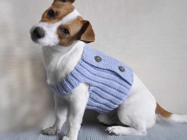 Как вязать одежду для собаки