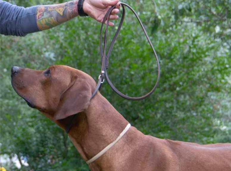 Ринговки для собак фото