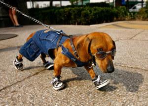 Обувь для собак мелких пород своими руками