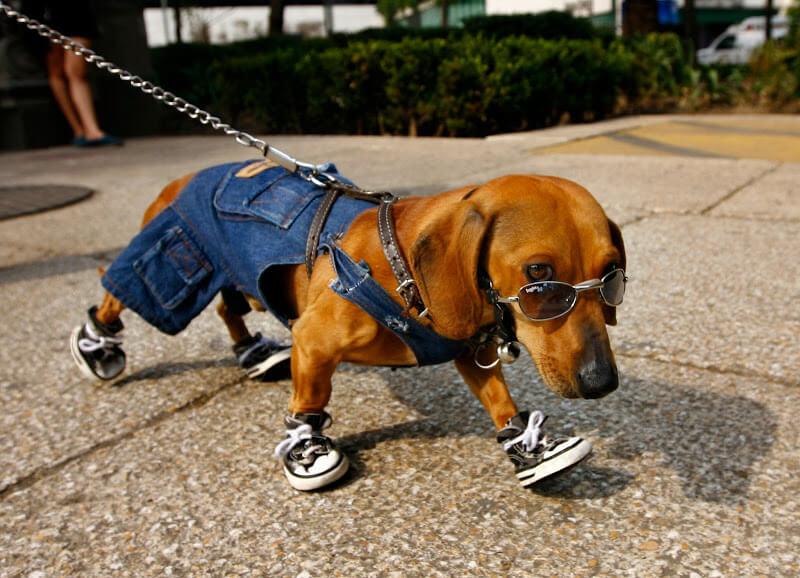 3045bce1fa36 Обувь для собак крупных и мелких пород, как сшить ботинки своими руками