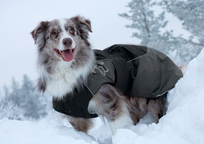 Купить одежду для собак лимарджи