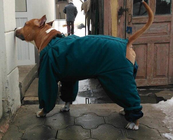 Зимний комбинезон собаки своими руками