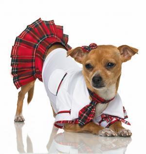 Сшить платье для собак своими руками