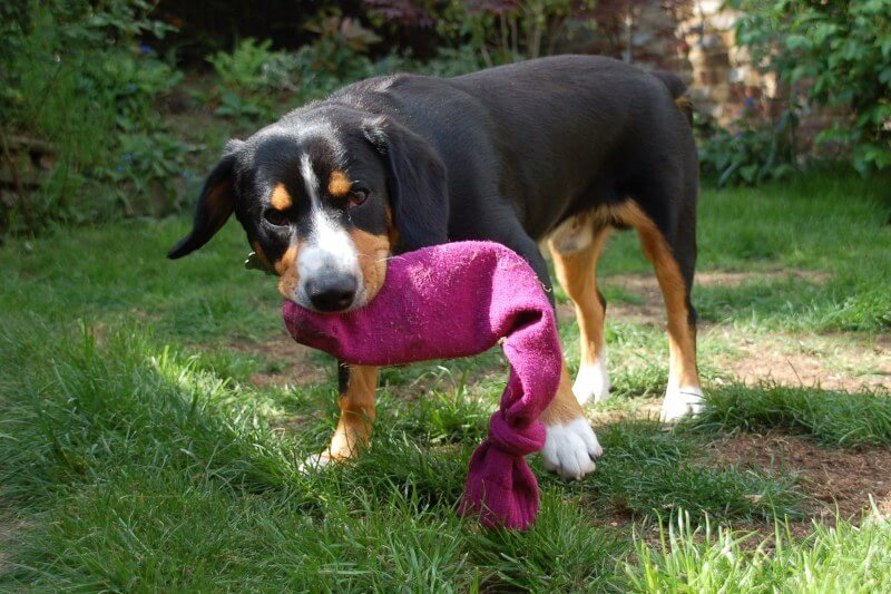 Как сделать игрушку своими руками собаку