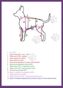 Собачьи мерки
