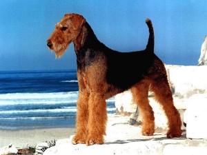 Собаки с большими ушами