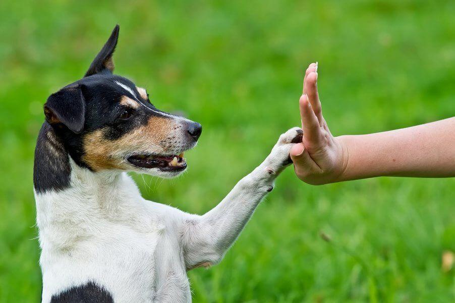 как часто стрич когти собакам