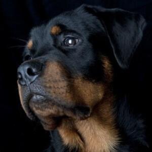 азидин для собак инструкция по применению - фото 7