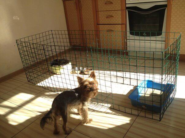 Фотография вольера для собак 4