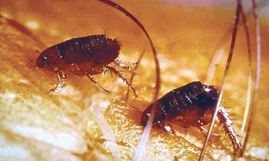 вывести паразитов коньяком и касторкой отзывы