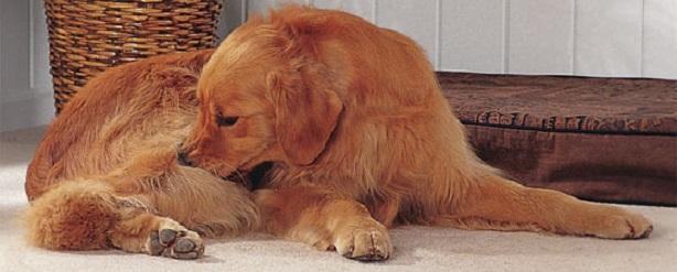 аллергия на еду у собаки