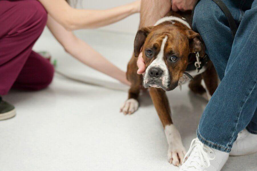 При первых же симптомах отравления - немедленно к ветеринару!