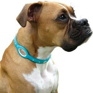 Собака в антиблошином ошейнике