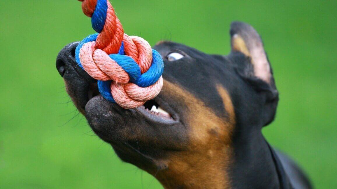 Как исправить неправильный прикус у собаки. Каким должен быть прикус зубов у собак