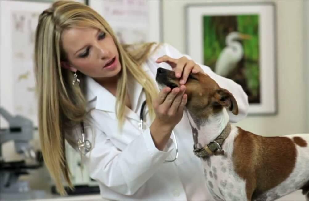 Как лечить кариес зубов у собаки