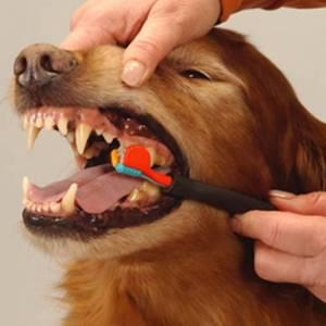 запах из пасти у собаки что делать