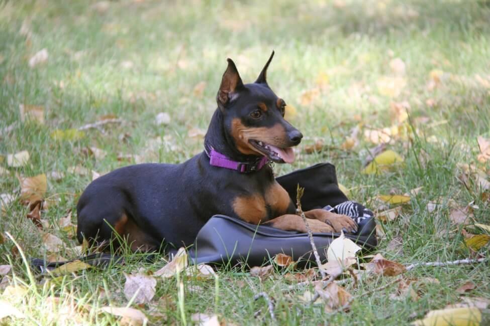 Приучаем пса к тому, что место может быть любым