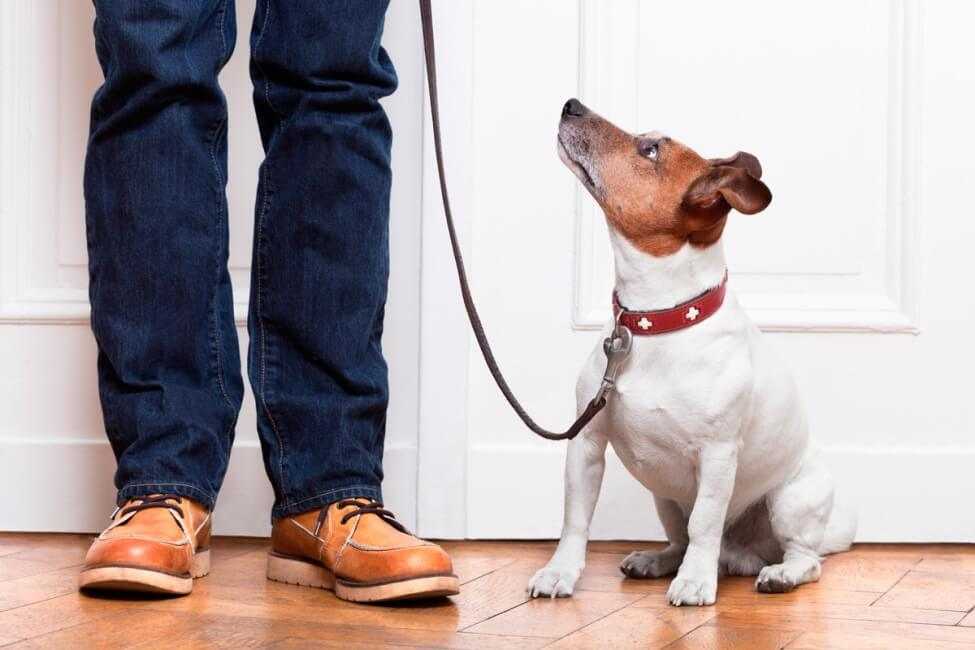 Умение подчиниться запрету - одно из важнейших для собаки