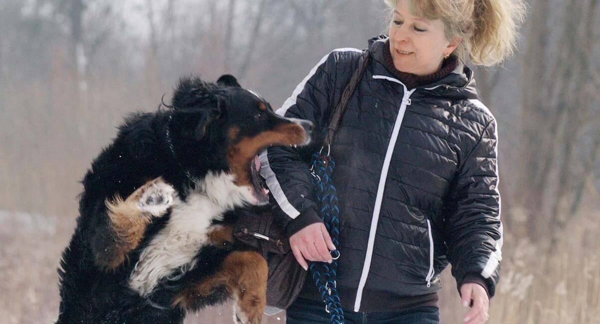 Как отучить собаку кусаться. Почему щенок кусает хозяина