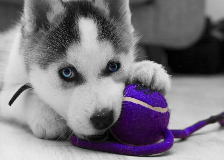 Для обучения щенка удобен мяч на веревке