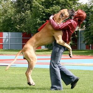 Собака прыгает на хозяина и гостей. Как ее отучить
