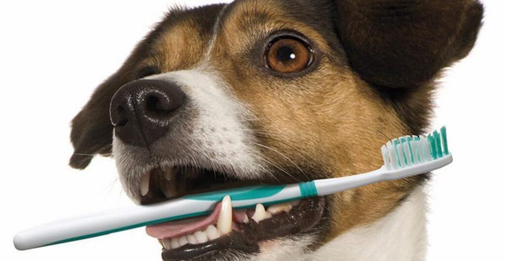 болезни зубов у собаки и уход за ними