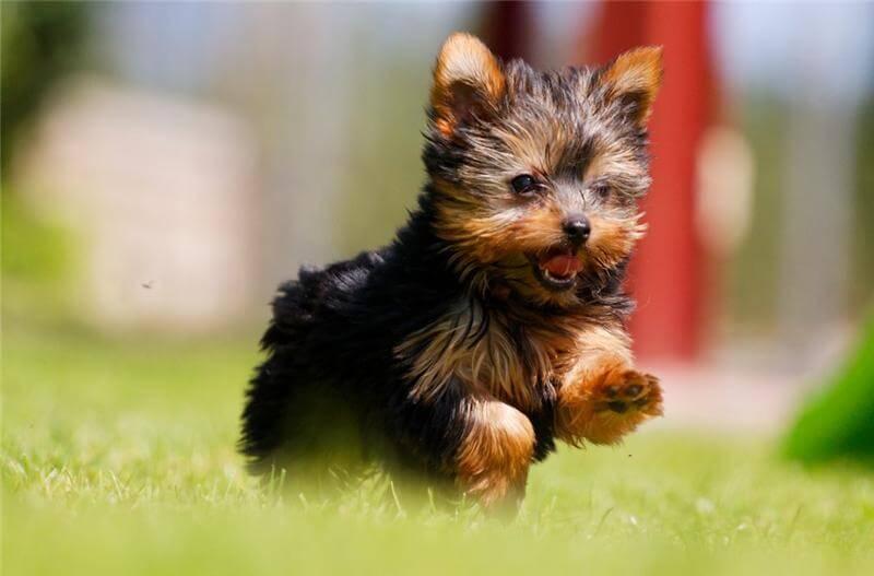 мелкая порода собак для детей