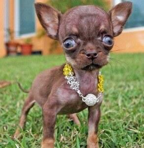 Цены на маленьких собак