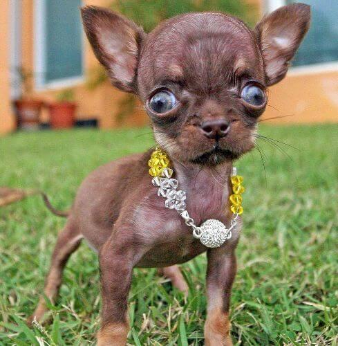 маленькие породистые собаки фото и цена