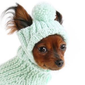 вязаная одежда для собак своими руками крючком или спицами