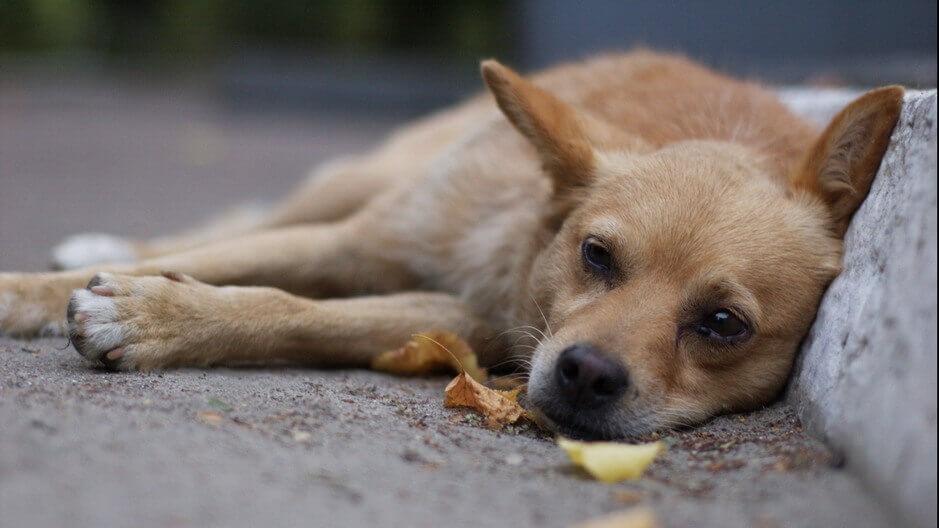 Большинство жертв догхантеров - безобидные животные