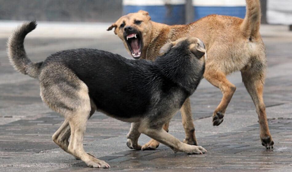 Яд для собак мгновенный результат