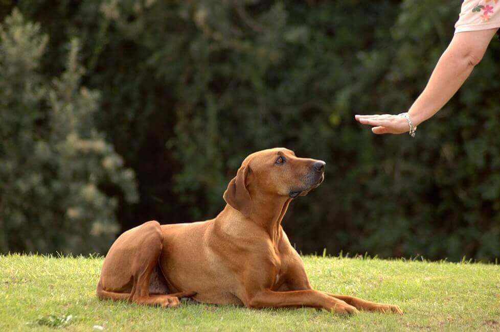 Послушная собака - удобная собака